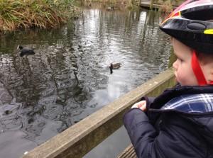Feeding the ducks in the park