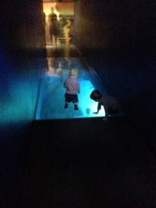 The Terrorists on shark walkway
