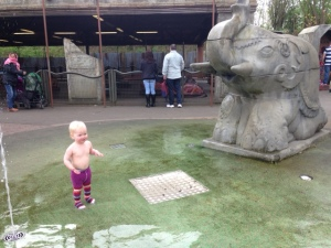 Bollie in the splash park