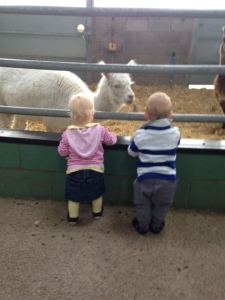Lama feeding