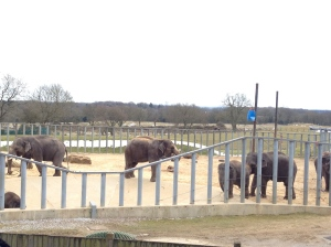 The Elephants at Wipsnade Zoo